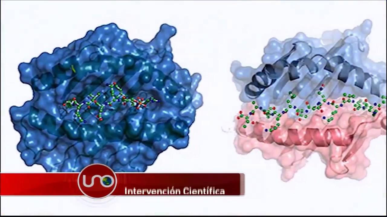 Descubrieron nuevos linfocitos que bloquean tumores cancerígenos