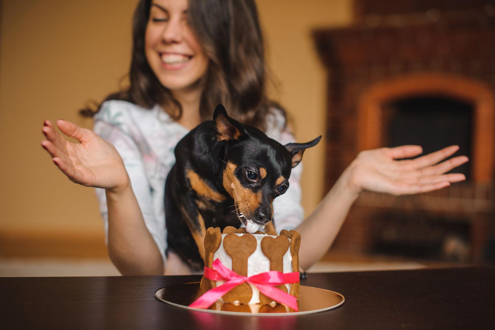 «Venga le cuento»: ¿Cómo se hace un cumpleaños para perros?