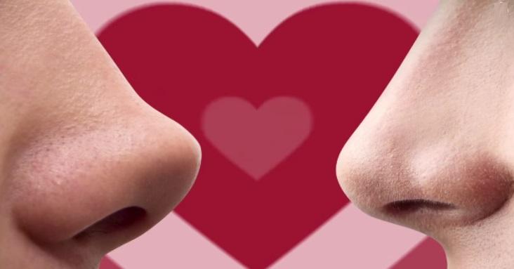 ¿Cuál es la importancia de las feromonas en los seres humanos?