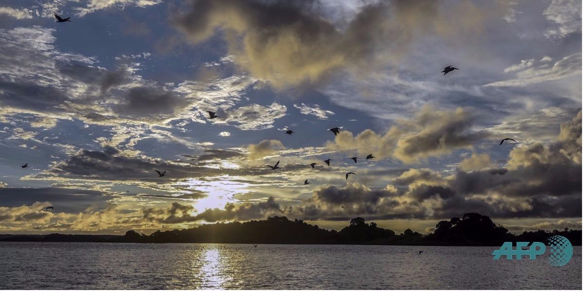El Conpes buscará impulsar la actividad marítima - Foto: LUIS ROBAYO / AFP