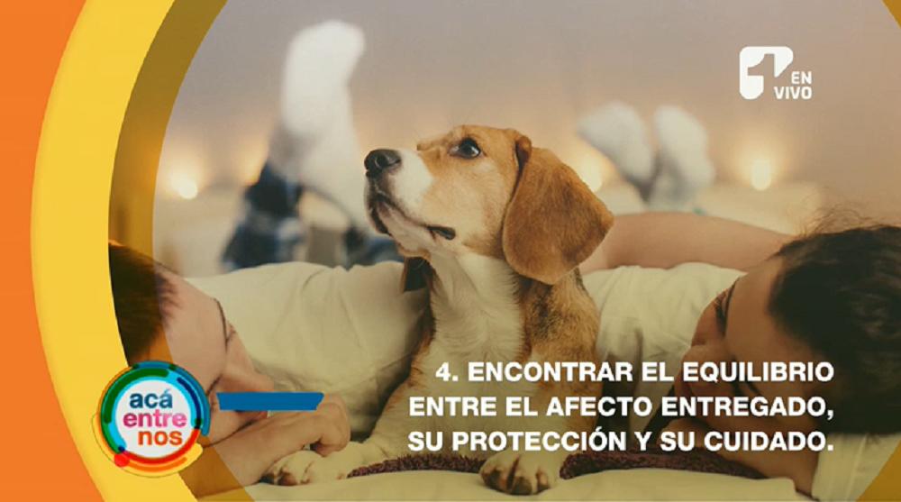Consejos para humanizar a tus mascotas de manera adecuada