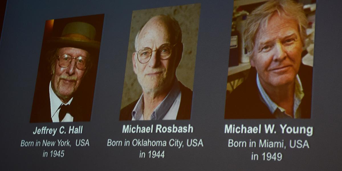 Tres estadounidenses, Nobel de Medicina por estudios del 'reloj biológico'