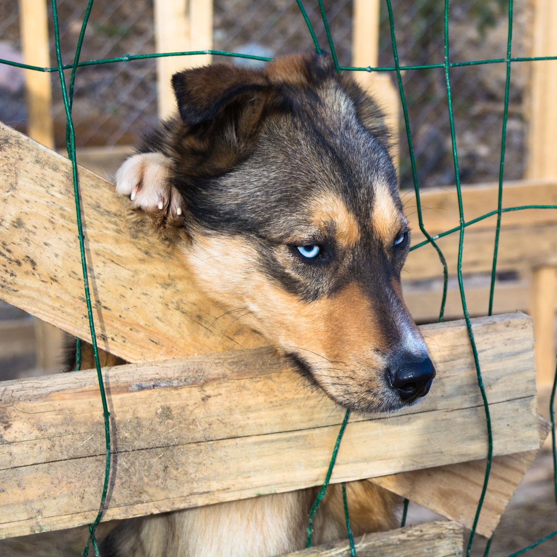 Estos son los diferentes tipos de maltrato animal