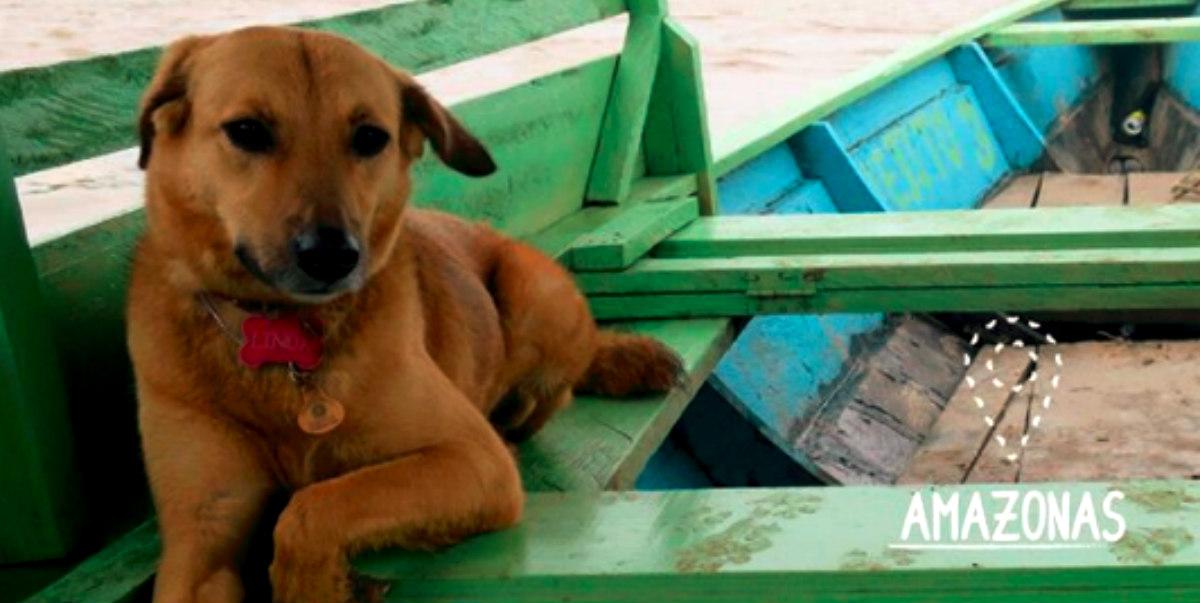 Linda Guacharaca, la perra bloguera que es toda una sensación