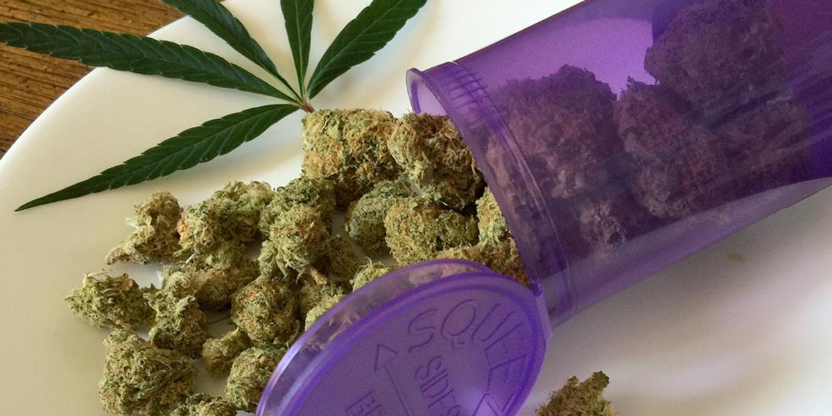 Desde Cali se realiza recorrido para conocer las bondades de la marihuana