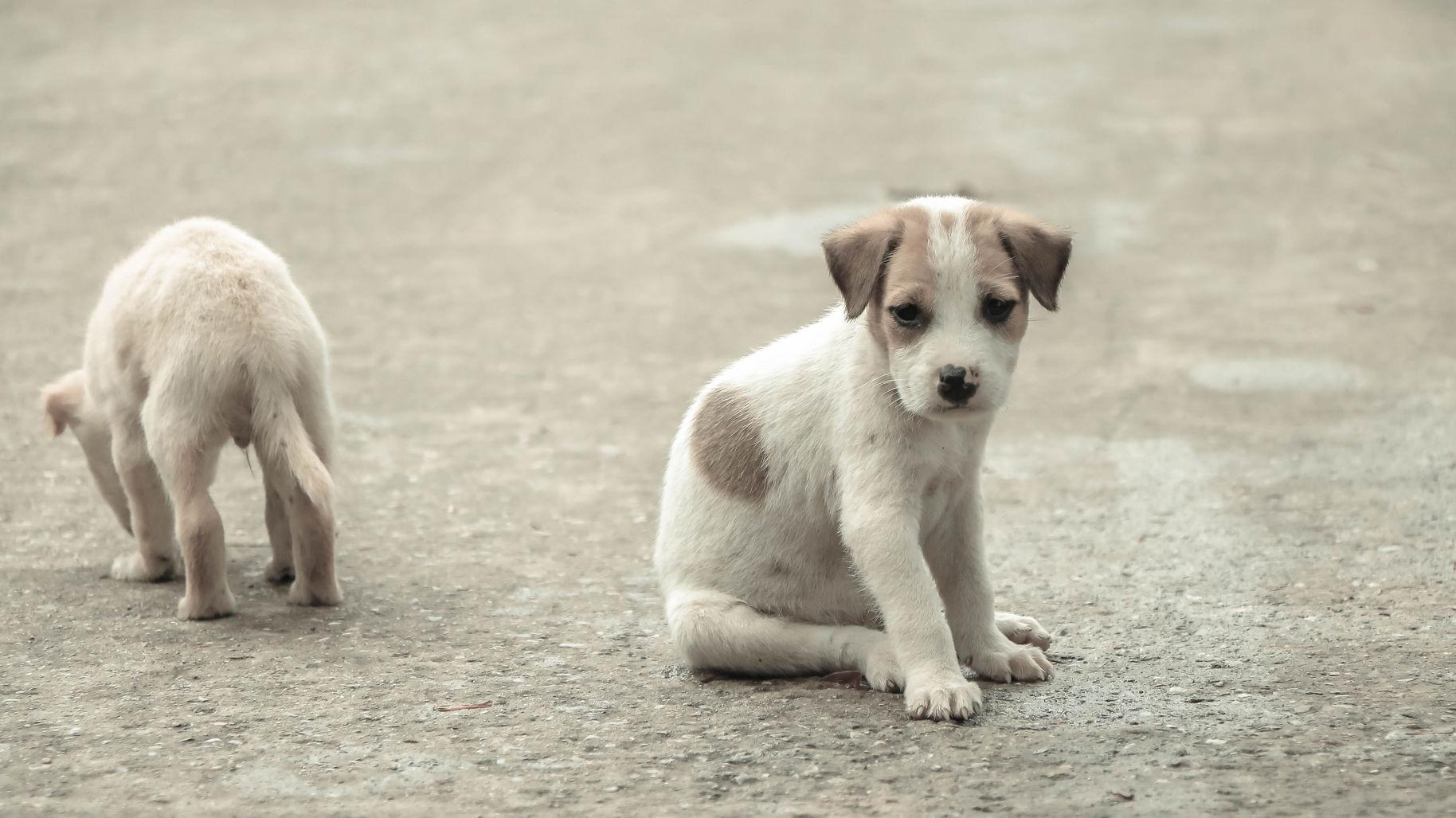 En California solo se podrán comprar mascotas de refugios de animales rescatados
