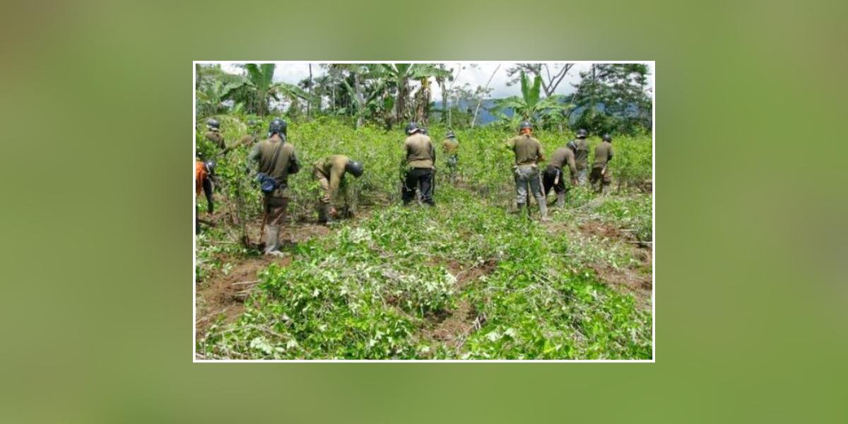 Campesinos del Bajo Cauca denuncian presiones para volver a los cultivos ilícitos