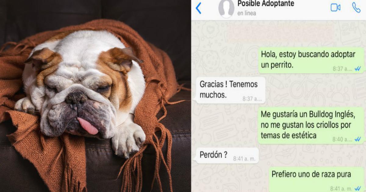 Chat de WhatsApp se hace viral por querer un perro de raza y no criollo