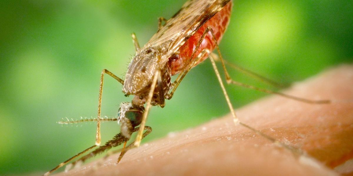 Adelantan jornada de prevención de la malaria en el Valle