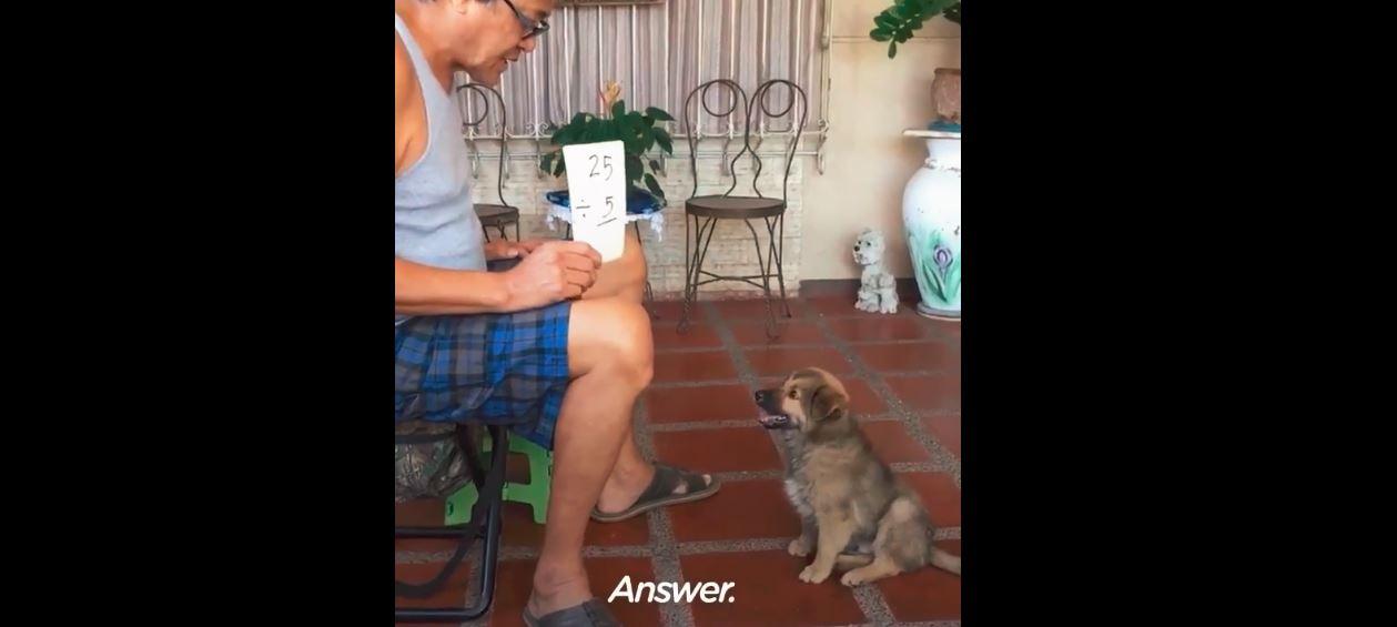 perro que sabe sumar multiplicar dividir matematicas the dodo
