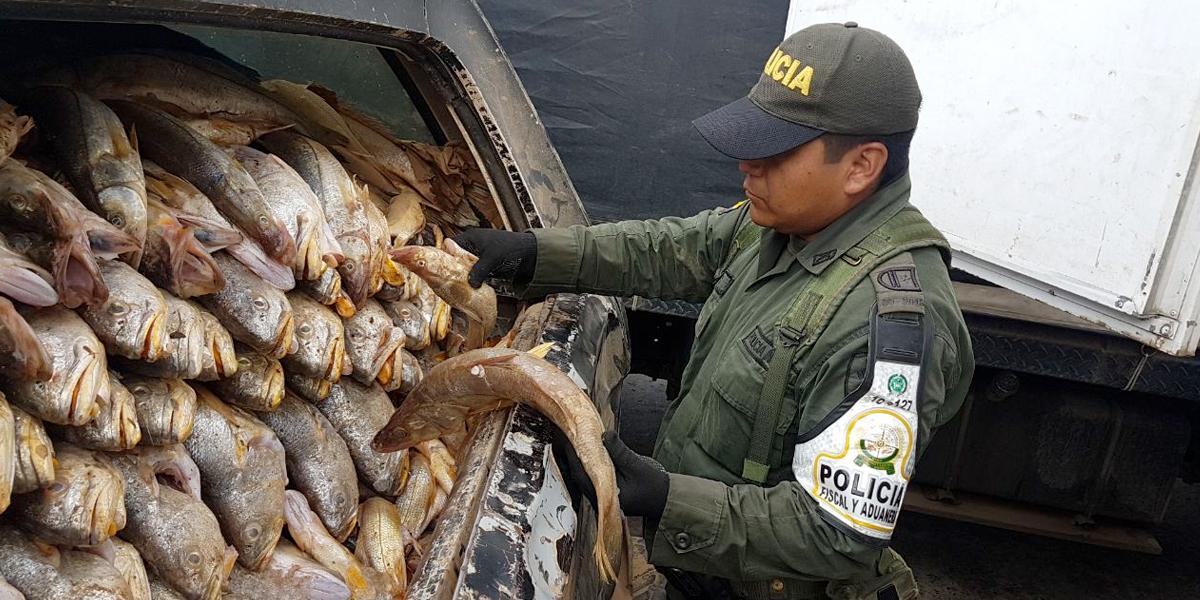 2968 kg de pescado incautado en las trochas ilegales de la frontera con Venezuela