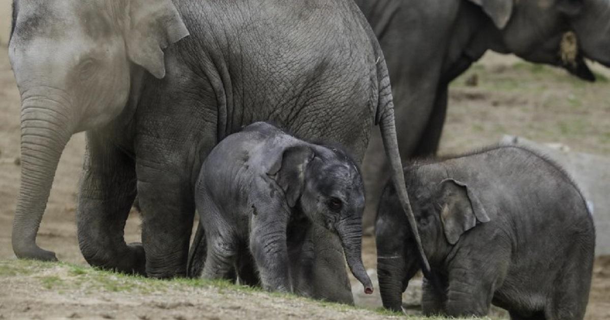 Enternecedoras fotos de elefante recién nacido en parque de animales