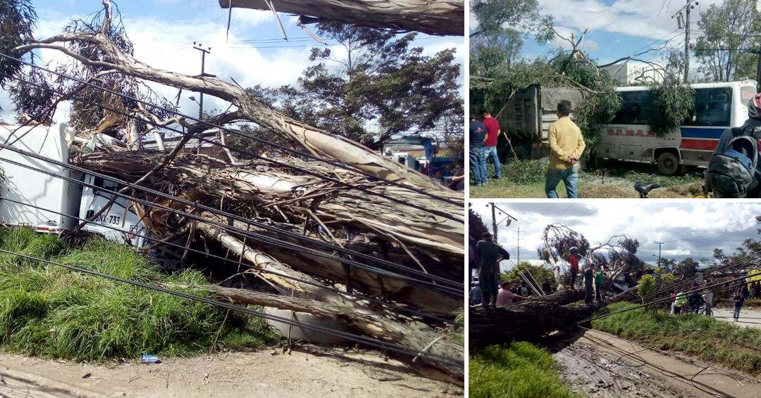Árbol que cayó sobre carros en occidente de Bogotá dejó dos personas heridas
