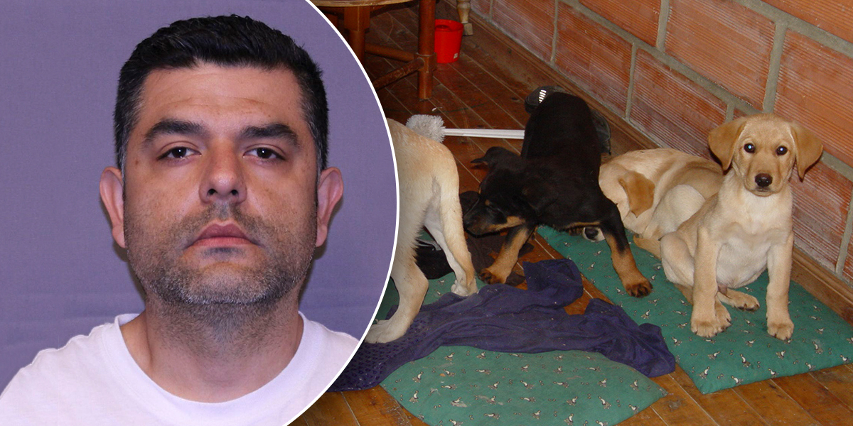 Extraditan a veterinario colombiano que usaba perros para traficar droga