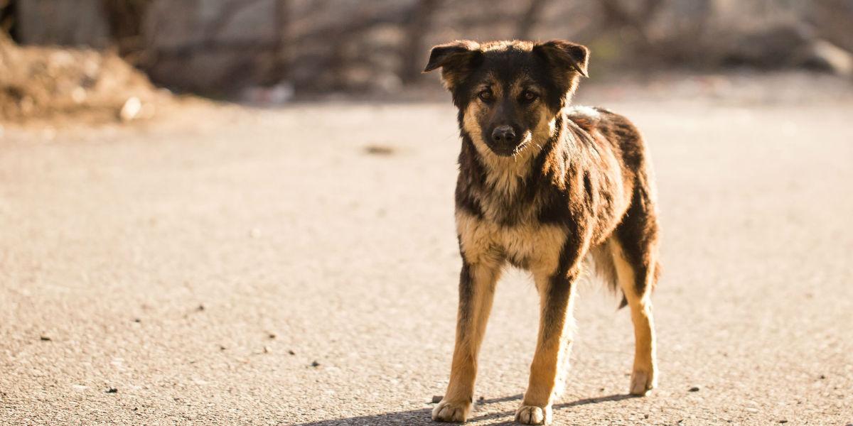 La justicia le pone la lupa al envenenamiento de perros en Bogotá