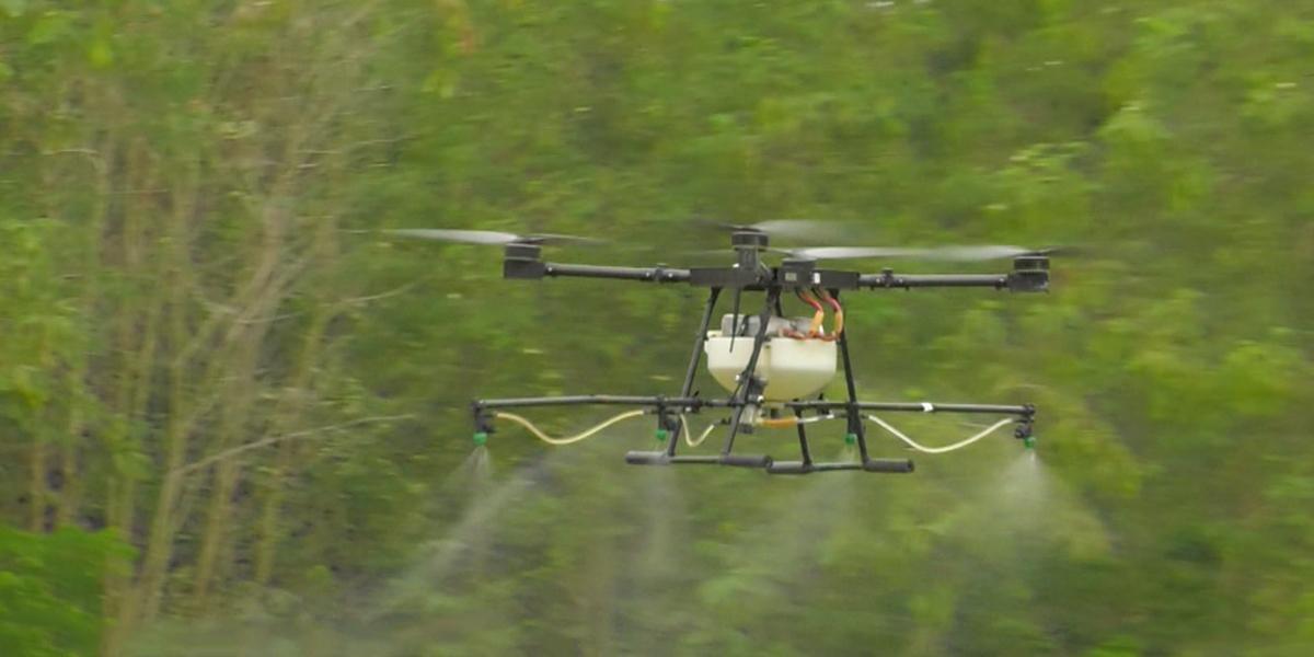 Drones permitirían aspersión segura de glifosato