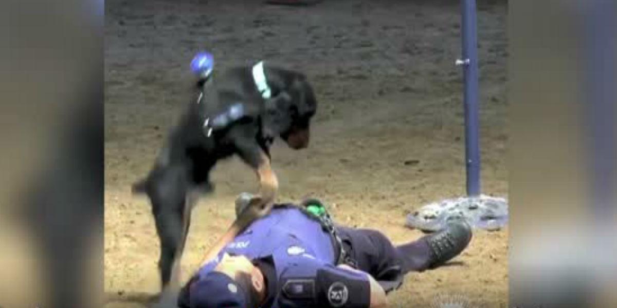 El perrito policía que salva vidas haciendo reanimación cardiopulmonar