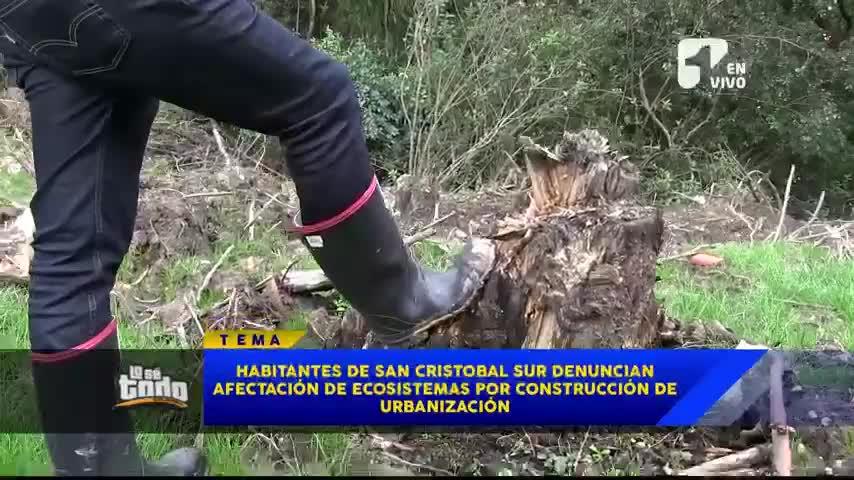 Denuncian tala indiscriminada de árboles en el sur de Bogotá
