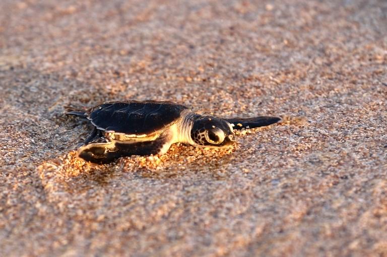Tuvo una alocada noche de fiesta y terminó con una tortuga muerta en su cuerpo