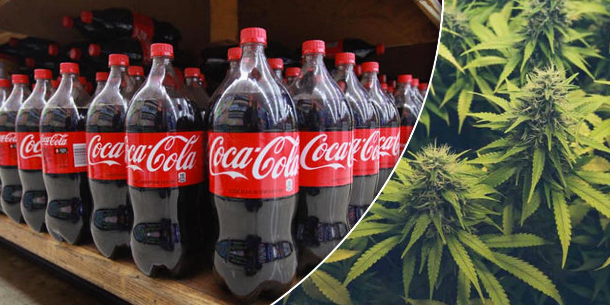 Coca Cola estudia entrar en el mercado de las infusiones de cannabis