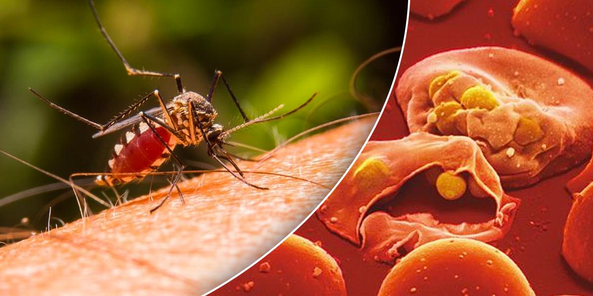 Malawi inicia primer programa de vacunación contra la malaria del mundo