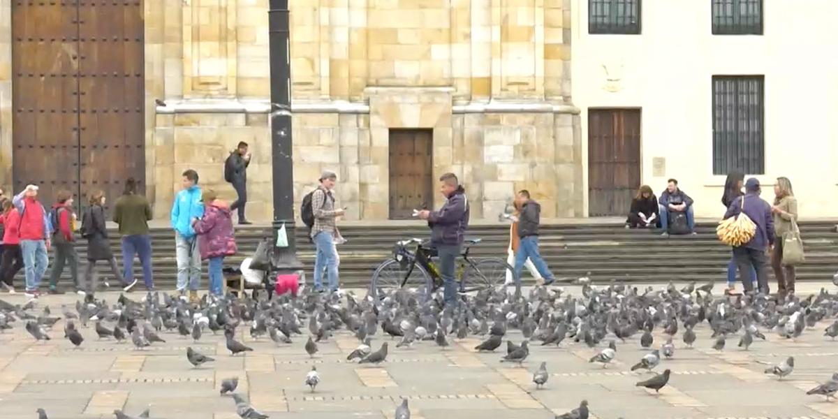 Vendedores de maíz estarían hasta diciembre en Plaza de Bolívar por sobrepoblación de palomas