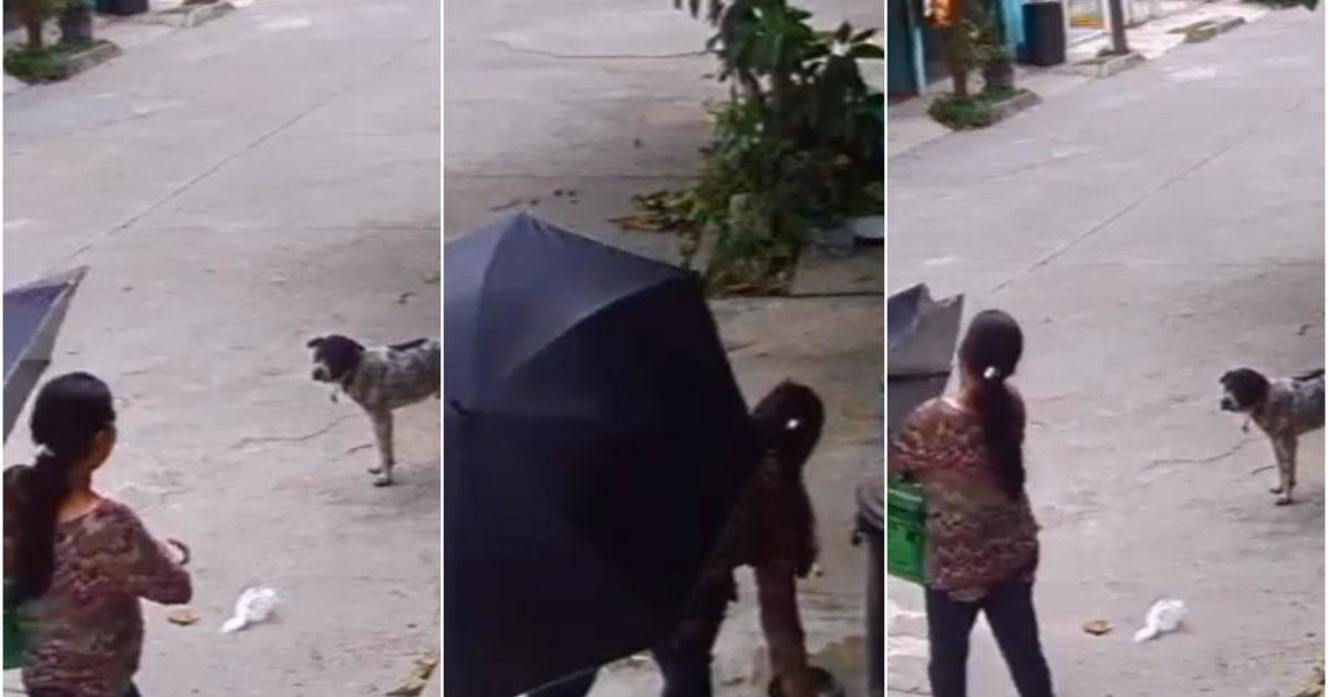 ¡Indignante! Una mujer le roba a un perrito callejero sus platos de comida y agua
