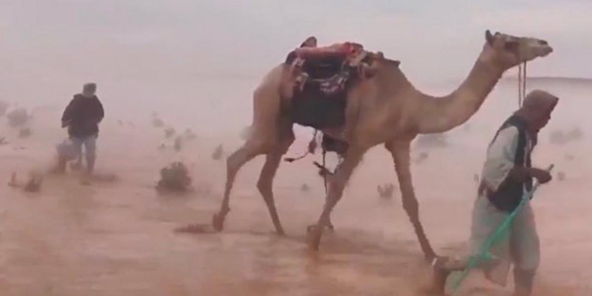 Lluvias torrenciales dejan catastróficas inundaciones en desierto de Arabia Saudita