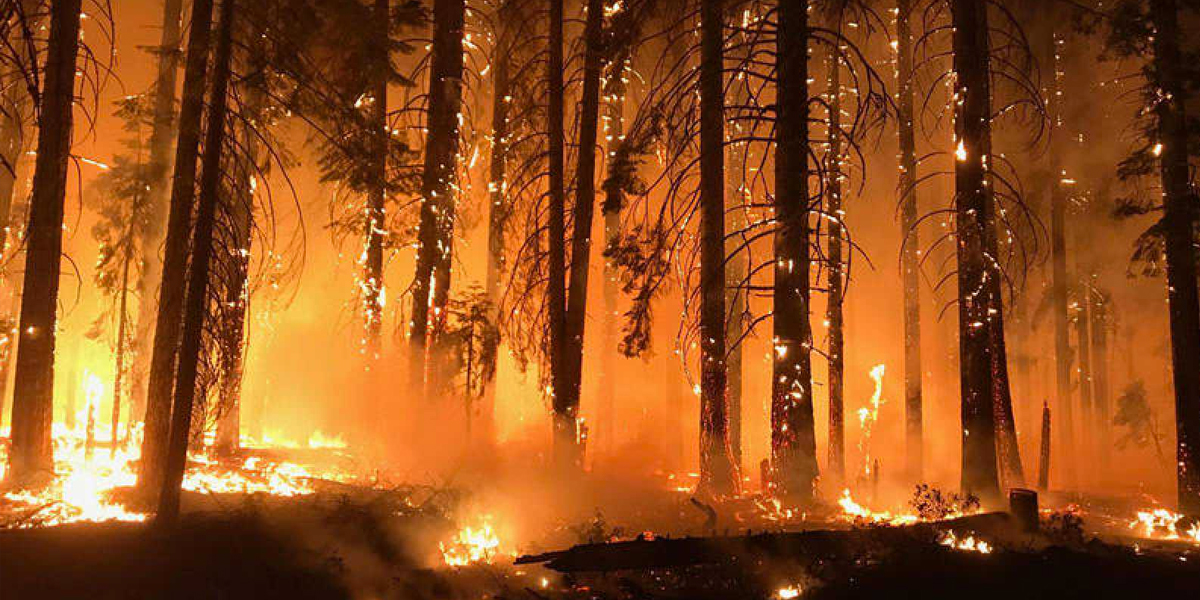 Incendio en California ha dejado al menos 81 muertos y 18.000 estructuras calcinadas