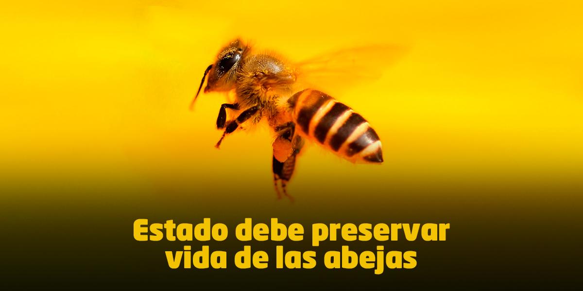 Trascendental fallo obliga al Gobierno a crear una política para proteger la vida de las abejas