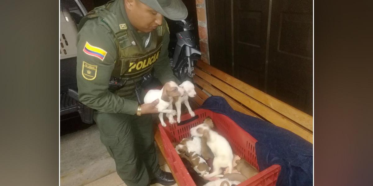 Policía rescata 32 animales domésticos maltratados en Medellín