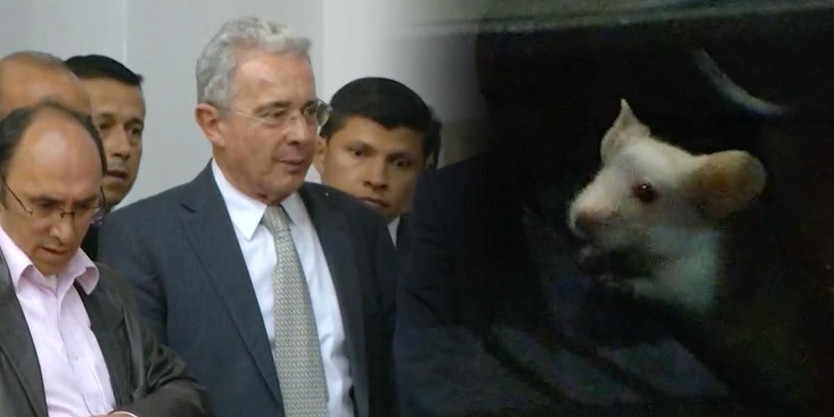 """""""Nos dijeron que era brujería"""": senador Uribe sobre el acto de los ratones en el Congreso"""