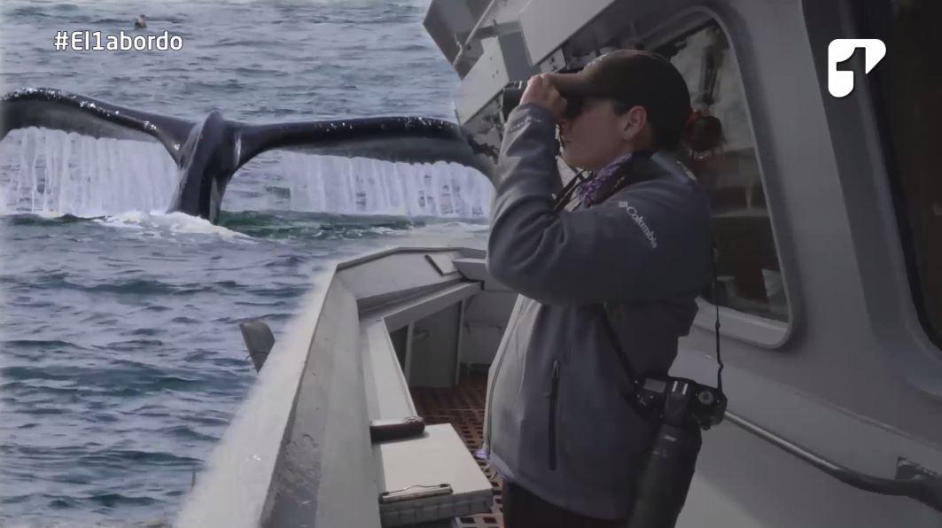 natalia botero biologa marina expedicion antartida ballenas jorobadas