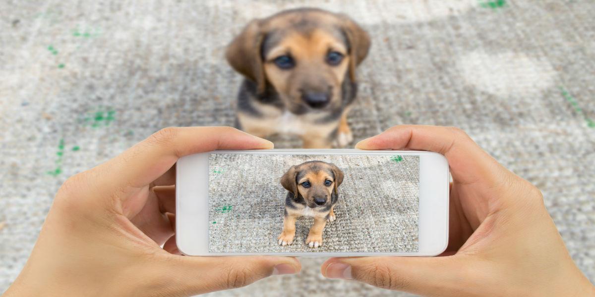 Facebook anuncia nueva política para prevenir la venta indiscriminada de mascotas