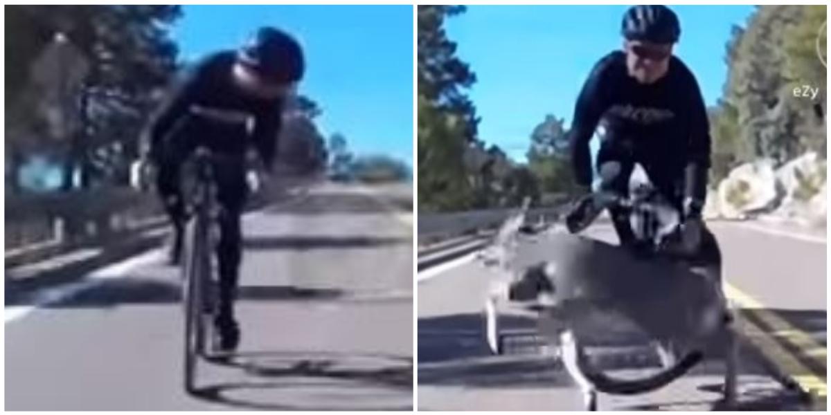 Ciclista sufrió aparatosa caída luego de chocar con un ciervo