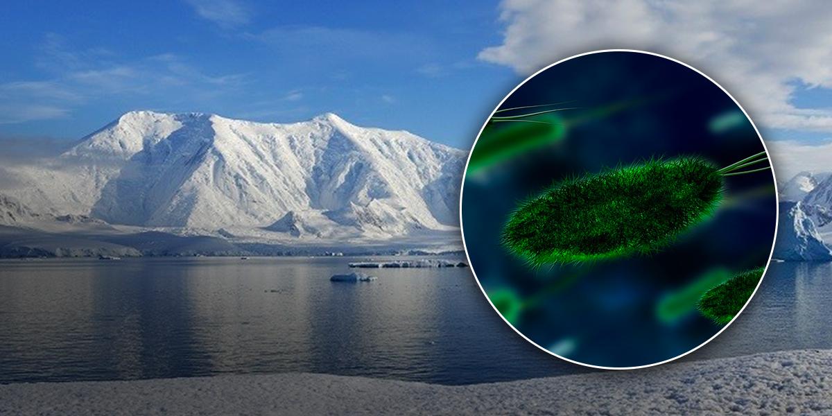 Millones de bacterias fueron encontradas en aguas del lago Mercer en la Antártida