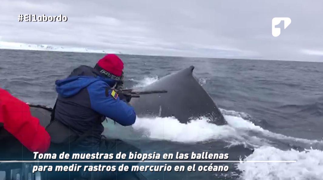 expedicion colombia antartida ballenas armada nacional