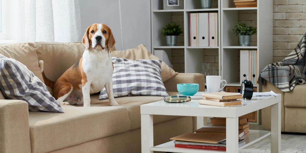 Datos para tener en cuenta si tienes mascotas en un conjunto residencial