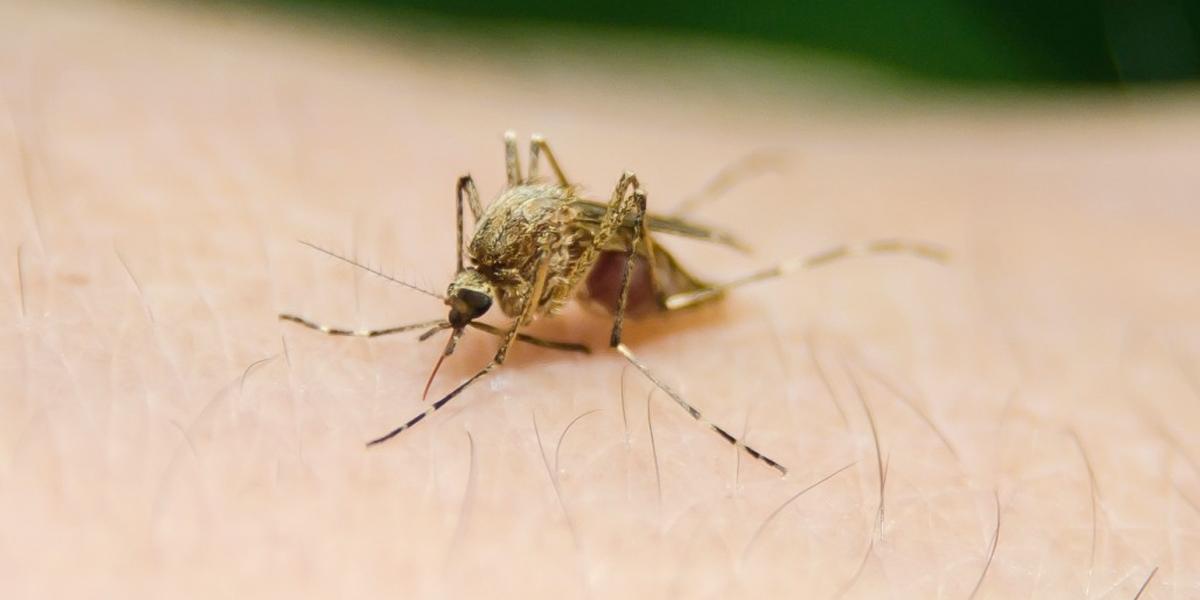 Alerta por epidemia sin precedentes con resurgimiento de enfermedades mortales en Colombia y la región