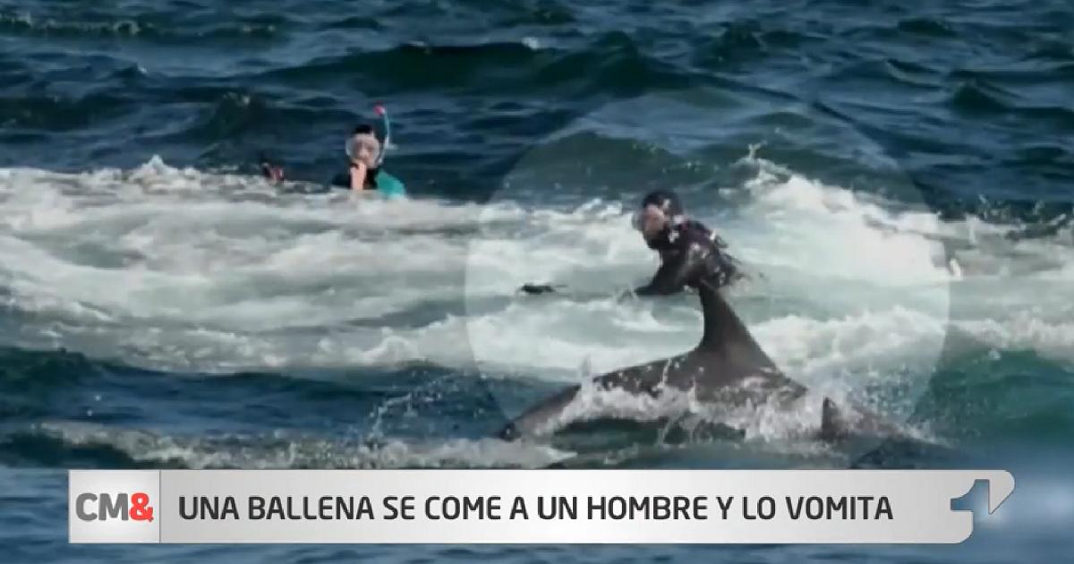 (Video) Sorprendente momento en que ballena se come a un buzo y lo escupe minutos después