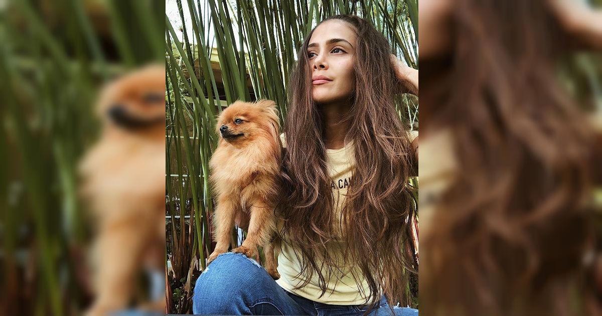Top 5 de las mascotas más 'pinchadas' de los famosos colombianos