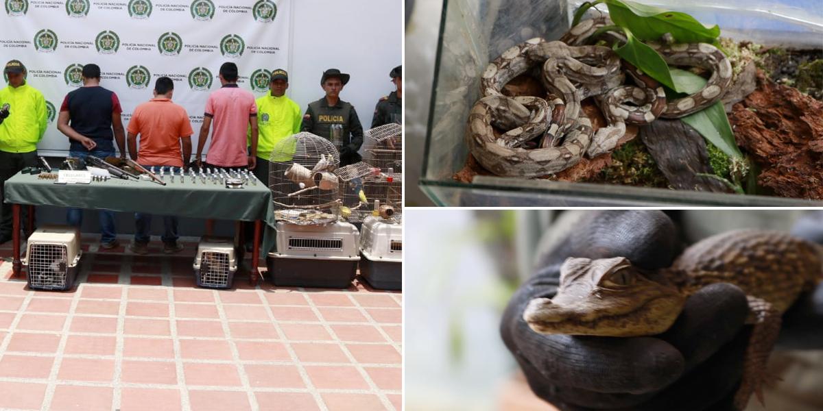 Desarticulan banda dedicada al tráfico de fauna silvestre en el Valle del Cauca