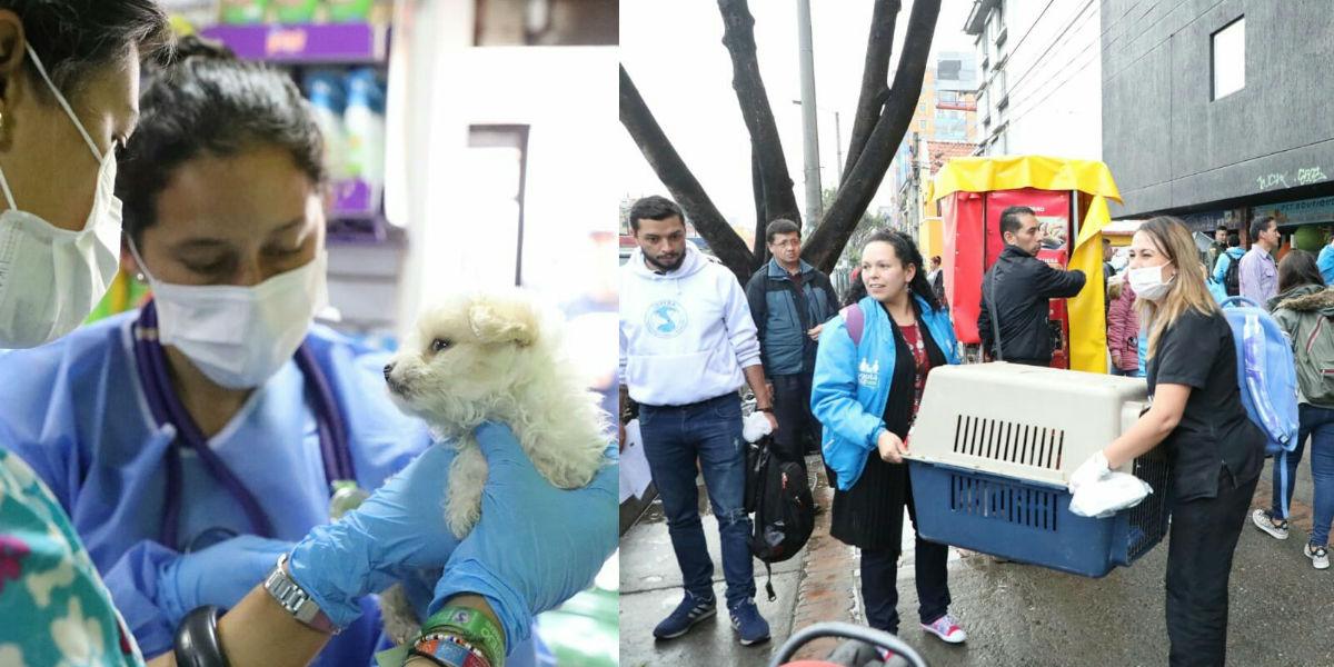 En operativo contra locales que venden mascotas en la Caracas se rescataron 27 animales