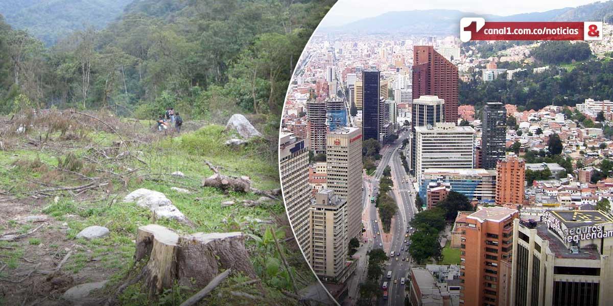 Inicia en Bogotá reunión mundial contra la deforestación