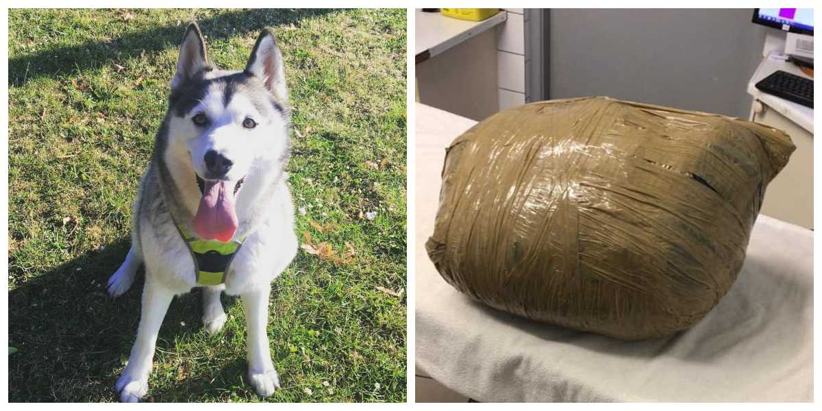Joven dejó a su perrita en guardería y días después se la entregaron en una bola de cinta adhesiva
