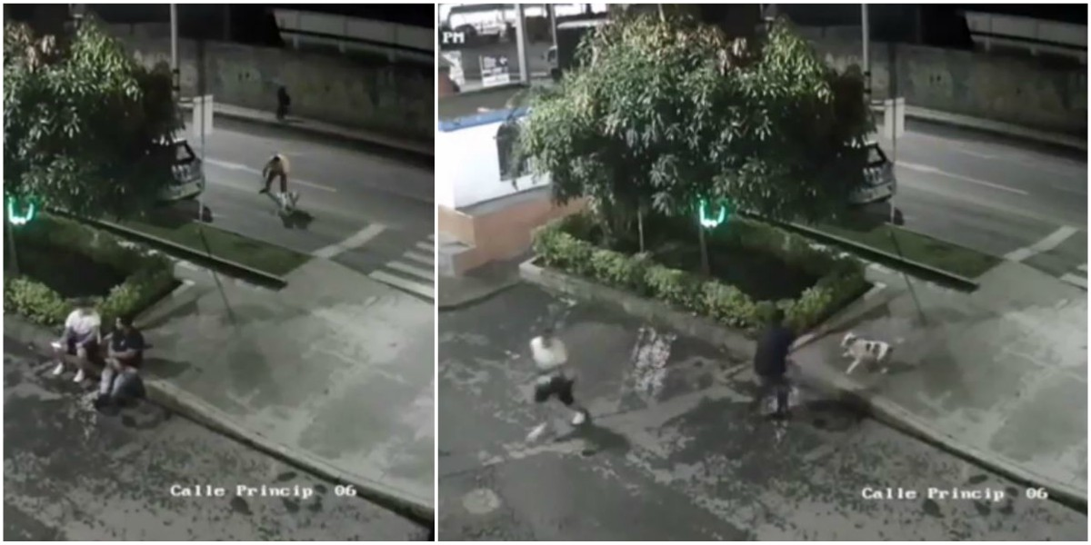 video perro pitbull ataca personas sabaneta antioquia
