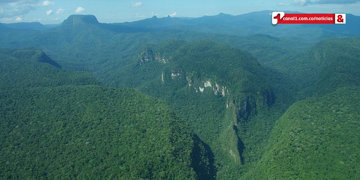 Proyecto busca restaurar y conservar áreas deforestadas en la Sierra de la Macarena