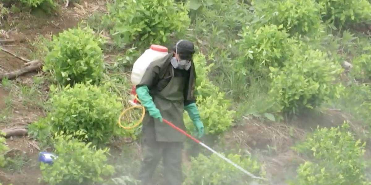 El costo humano de la erradicación manual de hoja de coca
