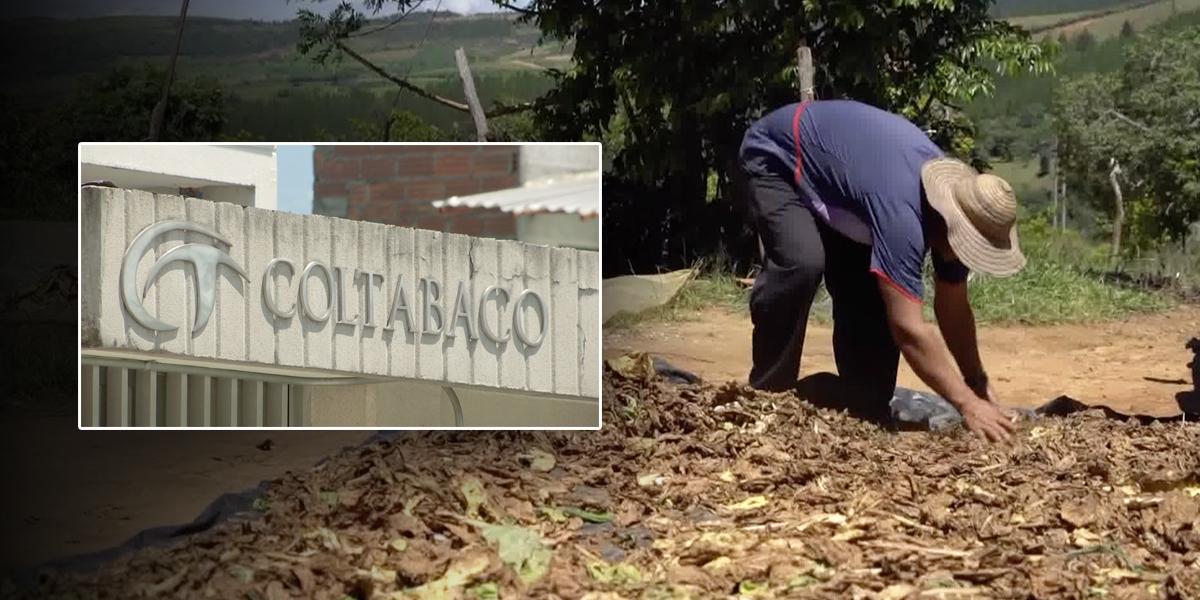 Tabacaleros de Santander anuncian paro nacional por cierre de Coltabaco