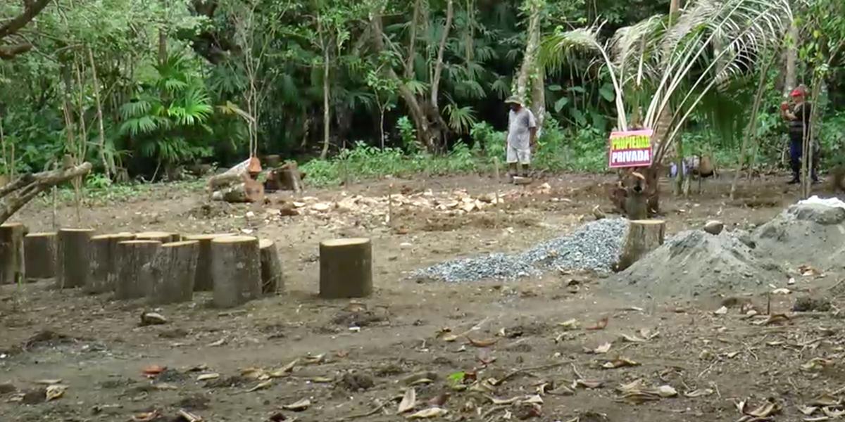 Campesinos y etnias cambian hábitos de cortar madera para cuidar bosques en Urabá